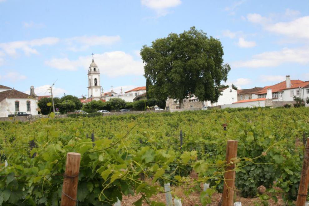 Adega e caves + prova de vinhos